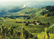 A Styrian Vineyard